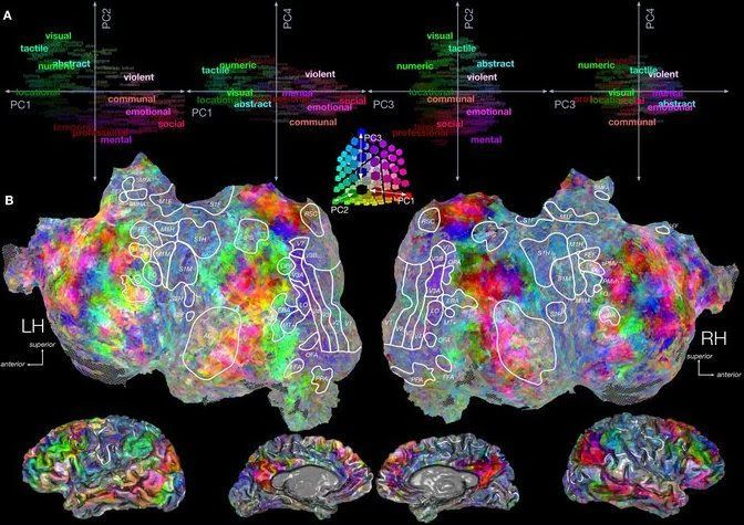 Scan of Brain Activity